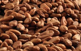 Польза сырых какао бобов