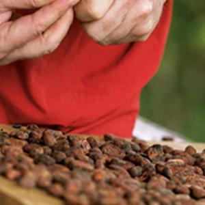 Что делать с натуральным какао