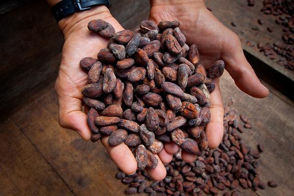 Картинки по запросу как растет какао