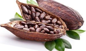 Как употребляют какао бобы?