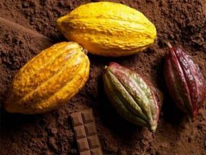 На картинке показано - что такое какао