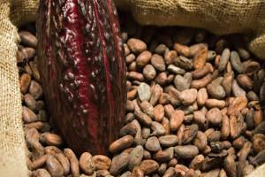 В составе какао много полезных веществ