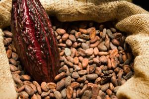 какао бобы 2