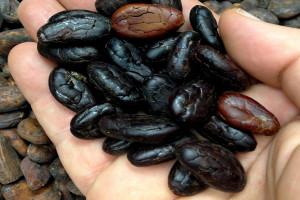какао2